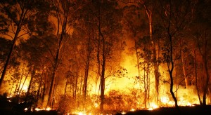 Bush fire bg